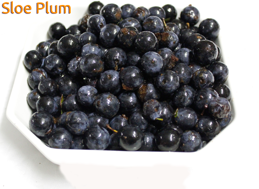 Sloe Plum - Prunus spinosa (Blackthorn)
