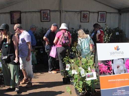 Yamina display at Tesselaars Plant Expo 2013
